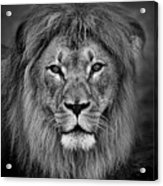 Portrait Of A Male Lion Black And White Version Acrylic Print