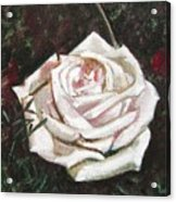 Portrait Of A Rose 3 Acrylic Print