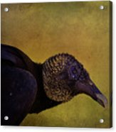 Portrait Of A Vulture Acrylic Print