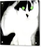 Portrait Of A White Cat Acrylic Print