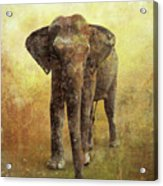 Portrait Of An Elephant Digital Painting With Detailed Texture Acrylic Print