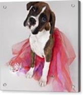 Portrait Of Dog Wearing Tutu Acrylic Print