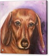 Portrait Of Fritz - Commissions Accepted Acrylic Print