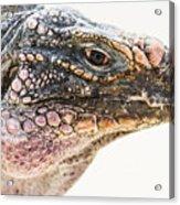 Portrait Of Iguana Acrylic Print