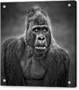 Portrait Of King Kongs Cousin IIi Acrylic Print