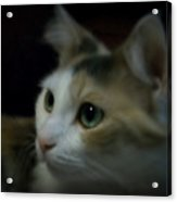 Portrait Of Miss Kitty Acrylic Print