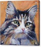 Portrait Of Squeaky Acrylic Print