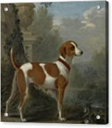 Portrait Of The Duke Of Hamilton Hound Acrylic Print