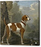 Portrait Of The Duke Of Hamilton's Hound Jewell Acrylic Print