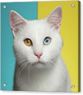 Portrait Of White Cat On Blue And Yellow Background Acrylic Print