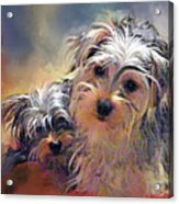 Portrait Of Yorkshire Terrier Puppy Dogs Acrylic Print