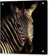 Portrait Of Zebra Acrylic Print