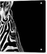 Portrait Of Zebra In Black And White Iv Acrylic Print