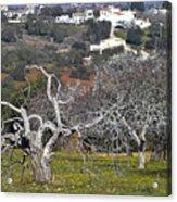 Portuguese Almond Plantation Acrylic Print