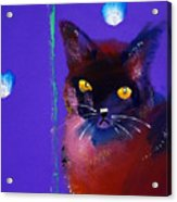 Posh Tom Cat Acrylic Print