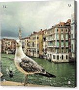 Posing For Tourists Acrylic Print