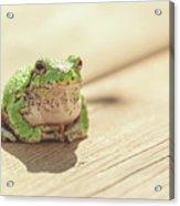 Posing Tree Frog Acrylic Print