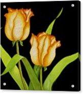 Posing Tulips Acrylic Print