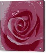 Poster Rose Acrylic Print