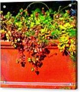 Pot Of Succulents Acrylic Print by Angela Annas