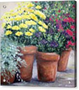 Pots In Bloom Acrylic Print