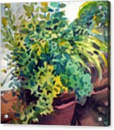 Potted Herbs Acrylic Print