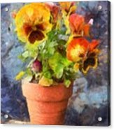 Potted Pansy Pencil Acrylic Print