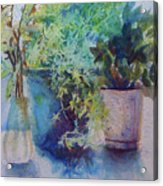 Potted Plant Study Acrylic Print