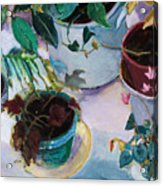 Potted Plants Acrylic Print by Diane Ursin