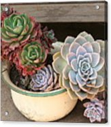 Potty For Plants Acrylic Print