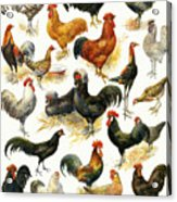 Poultry Acrylic Print
