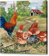 Poultry Peckin Pals Acrylic Print
