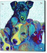 Pound Puppies Acrylic Print by Jane Schnetlage
