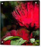Powder Puff In Red Acrylic Print