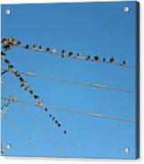 Power Line Birds Acrylic Print