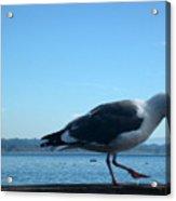 pr 117 - A  Seagull On Thr Fence Acrylic Print