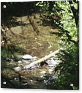 pr 134 - Babbling Brook Acrylic Print