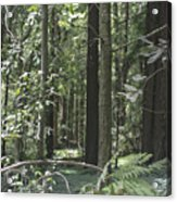 pr 138 - Frolicking Trees Acrylic Print