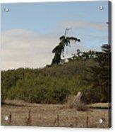 pr 180 - The Leaning Tree Acrylic Print