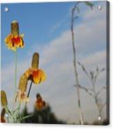 Prairie Cone Flowers Against Blue Sky Vertical Number Two Acrylic Print
