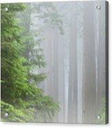 Prairie Creek State Park Acrylic Print