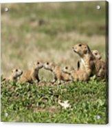 Prairie Dog Family 7270 Acrylic Print