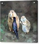 Prairie Dogs And A Bird Eating Acrylic Print