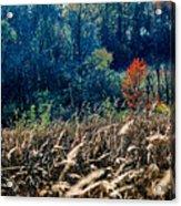 Prairie Edge Acrylic Print