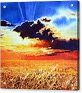 Prairie Gold Acrylic Print