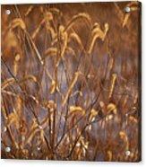 Prairie Grass Blades Acrylic Print