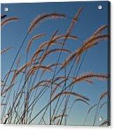Prairie Grass Landscape Acrylic Print