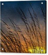 Prairie Grass Sunset Patterns Acrylic Print