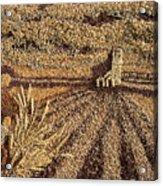 Prairie Harvest Acrylic Print