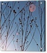 Prairie Plants Acrylic Print